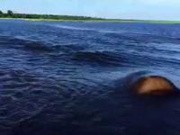 Hipopotam omal nie rozniósł motorówki z ludźmi w pył