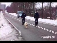 Ucieczka świnki