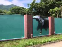 Słoń pływa w basenie