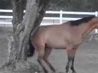 Bardzo inteligentny koń