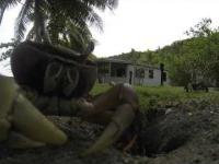 Krab chcial ukrasc kamere GoPro