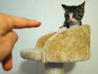 Kot w defensywie