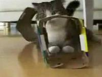 Kot vs pudełko