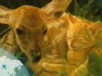 Zwierzęcy film romantyczny [+18]