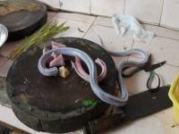 Specjały z węża dla początkujących