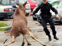 Najlepsze wpadki Policji