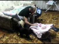 Kot broni dziecko przed ojcem