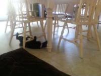 Ten kot ma wyjątkowo dużo energii i w dziwny sposób spędza wolny czas