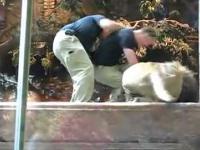 Lwica ratuje czlowieka