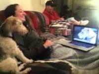 Psia rozmowa na Skypie