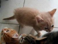Głodne kociaki