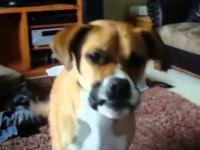 Kiedy psu chce się pić... połyka :)