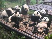 schłodzony Pandas zjeść lunch