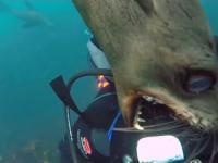 Atak zwierząt wodnych na ludzi