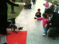 Zabawa dziewczynki z psią marionetką