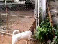 Brawurowa ucieczka psa