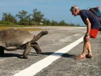 Co się stanie, gdy przerwie się intymne igraszki żółwi...