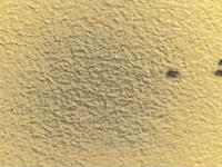 Mrówkowa ruchliwa ulica
