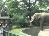 Słoń zgrywus
