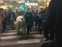 Biały niedzwiedź w Tokio