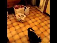 lojalny kot Właściciel pozdrawia