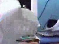Smok - złudzenie optyczne