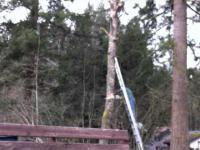 Wycinka drzewa wersja hardcore extreme!