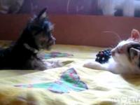 Oddaj moją zabawkę!