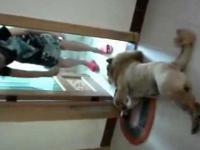 Pies udaje martwego by uniknąć kąpieli