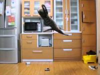 Koci bramkarz