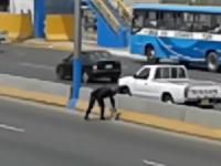 Policjant zatrzymuje ruch aby ratować przestraszonego psa ze środka autostrady