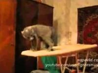 Zwariowany kot.