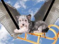 Z cyklu WTF: Psi podróżnik o bocianach