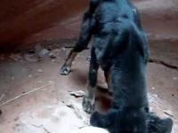 Akcja ratowania psa