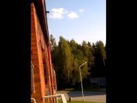 Szalona wiewiórka skacze z dachu