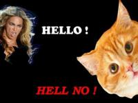Beyoncé - Hello (Cat Version)