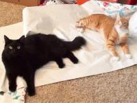 Logika kotów w święta