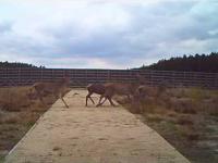 Użytkowanie górnych przejść dla zwierząt na autostradzie A4