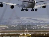 Reakcja owiec na przelatujący samolot