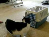 Reakcja starego kota na nowego