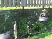Świetny skok wiewiórki