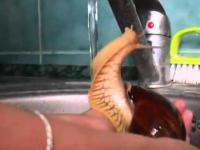 Ślimak bierze prysznic