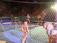 Przedstawienie w cyrku wymknęło się spod kontroli
