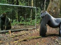Reakcja dzikich zwierząt na lustro
