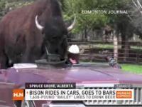 Bizon który jeździ kabrioletem