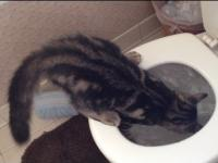 O to dlaczego nie można zostawiać kota samego w toalecie