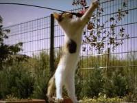 Bawiący się kot w slow motion