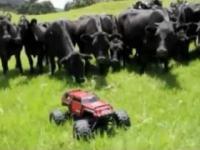 Zdalnie sterowany pasterz