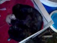 Kotka mruczy do maleńkich kociaków