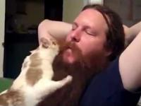 Kocie brody i fryzury
